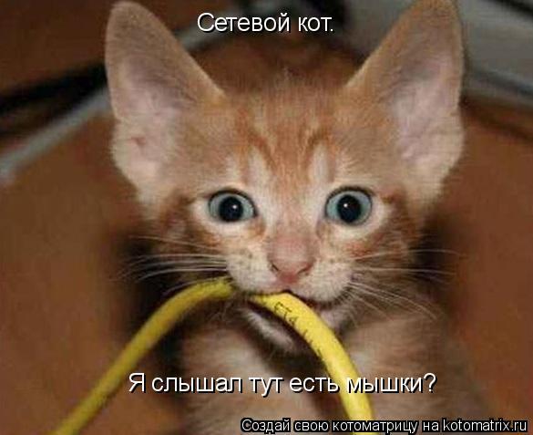Котоматрица: Сетевой кот. Я слышал тут есть мышки?