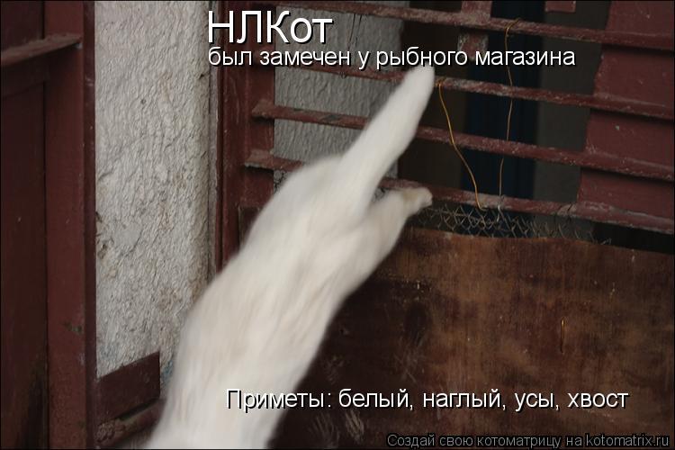 Котоматрица: НЛКот  был замечен у рыбного магазина Приметы: белый, наглый, усы, хвост
