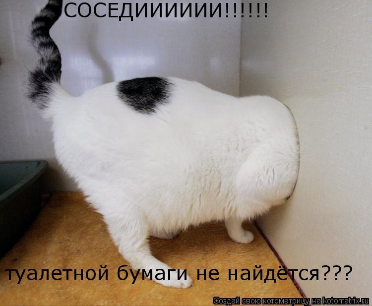 Котоматрица: СОСЕДИИИИИИ!!!!!! туалетной бумаги не найдётся???