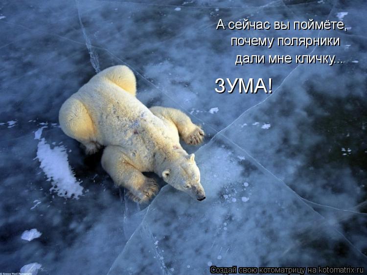 Котоматрица: А сейчас вы поймёте, почему полярники дали мне кличку... ЗУМА!