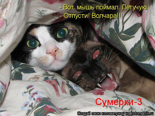 Котоматрица: Сумерки-3 - Отпусти! Волчара!!! - Вот, мышь поймал. Летучую.