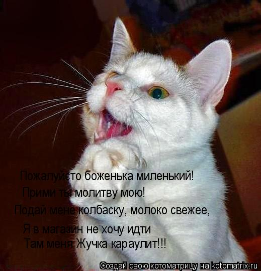 Котоматрица: Пожалуйсто боженька миленький! Прими ты молитву мою! Подай мене колбаску, молоко свежее, Я в магазин не хочу идти Там меня Жучка караулит!!!