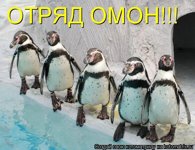 Котоматрица: ОТРЯД ОМОН!!!