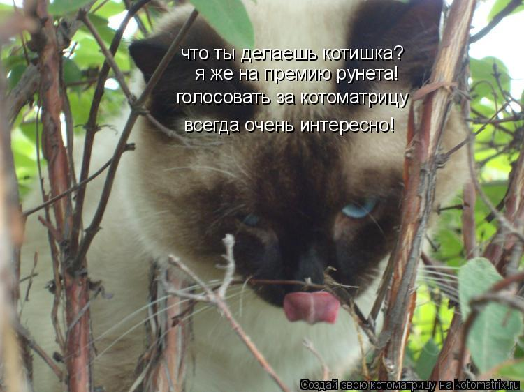Котоматрица: что ты делаешь котишка?  я же на премию рунета! голосовать за котоматрицу всегда очень интересно!