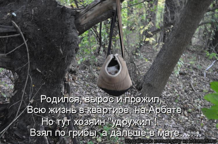 """Котоматрица: Родился, вырос и прожил, Всю жизнь в квартире, на Арбате Но тут хозяин """"удружил""""! Взял по грибы, а дальше в мате........"""