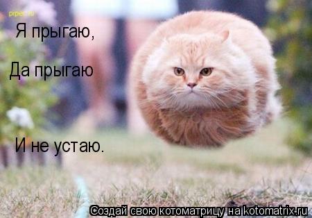 Котоматрица: Я прыгаю, Да прыгаю И не устаю.