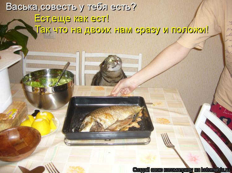 Котоматрица: Васька,совесть у тебя есть? Ест,еще как ест! Так что на двоих нам сразу и положи!