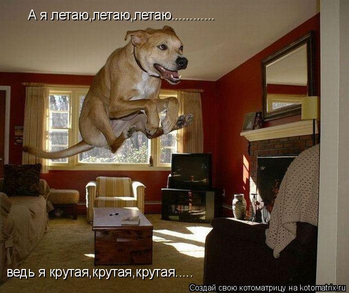 Котоматрица: А я летаю,летаю,летаю............ ведь я крутая,крутая,крутая.....