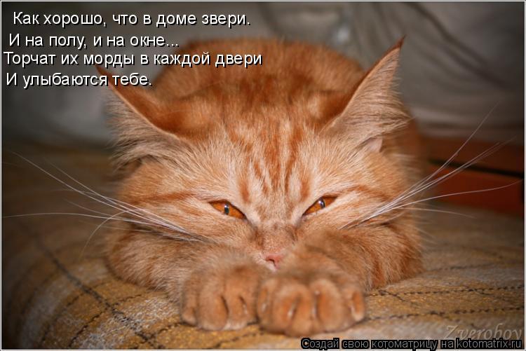 Котоматрица: Как хорошо, что в доме звери. И на полу, и на окне...  Торчат их морды в каждой двери  И улыбаются тебе.