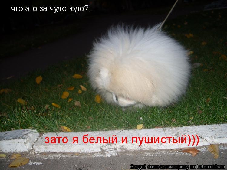 Котоматрица: что это за чудо-юдо?... зато я белый и пушистый)))