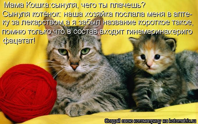 Котоматрица: Мама Кошка:сынуля, чего ты плачешь? Сынуля котёнок: наша хозяйка послала меня в апте- ку за лекарством,а я забыл название короткое такое, пом