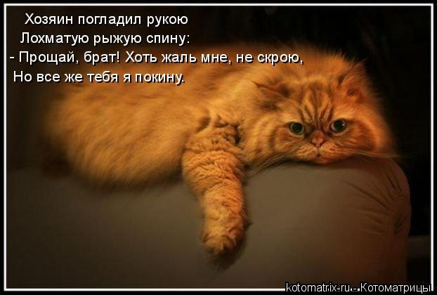 Котоматрица: Хозяин погладил рукою  Лохматую рыжую спину: - Прощай, брат! Хоть жаль мне, не скрою, Но все же тебя я покину.