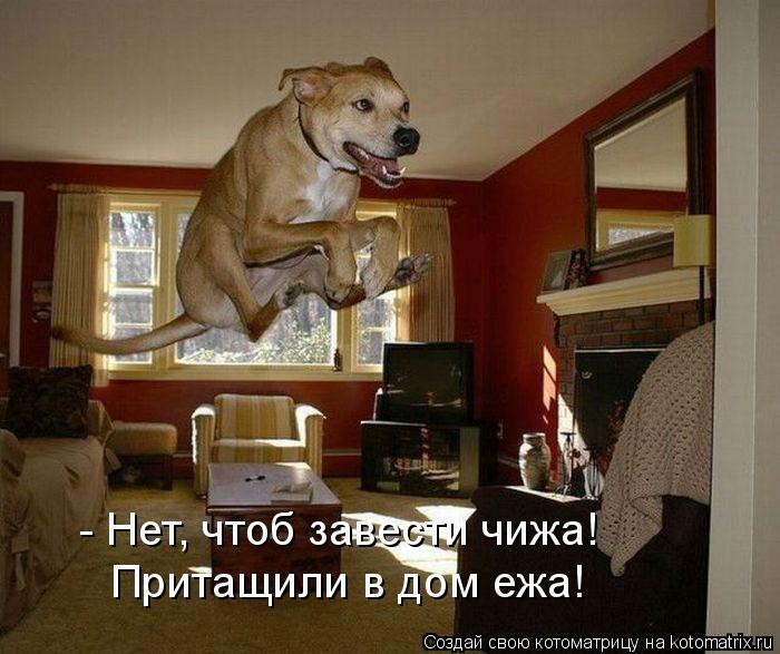 Котоматрица: - Нет, чтоб завести чижа! Притащили в дом ежа!