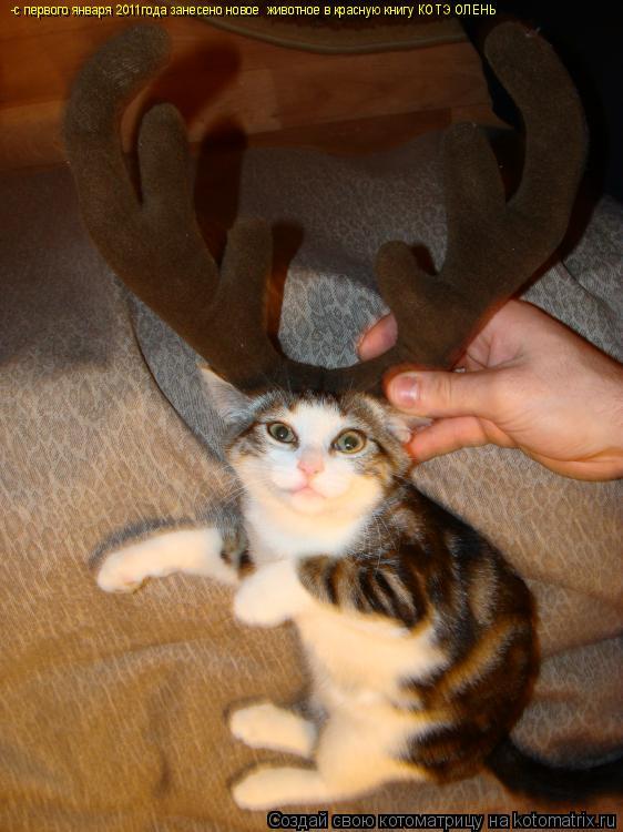 Котоматрица: -с первого января 2011года занесено новое  животное в красную книгу КОТЭ ОЛЕНЬ
