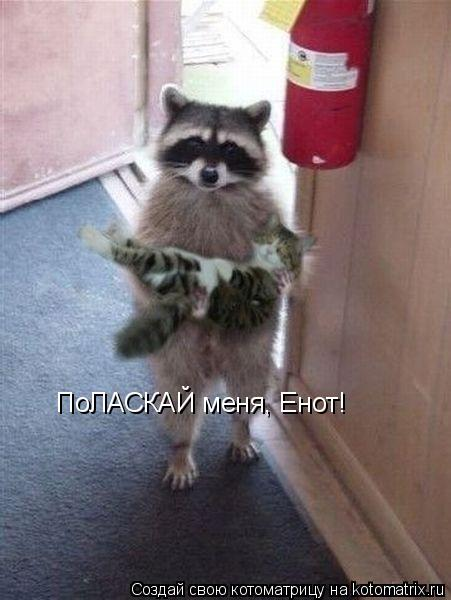 Котоматрица: ПоЛАСКАЙ меня, Енот!
