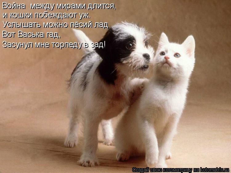 Котоматрица: Война  между мирами длится, и кошки побеждают уж. Услышать можно пёсий лад Вот Васька гад, Засунул мне торпеду в зад!
