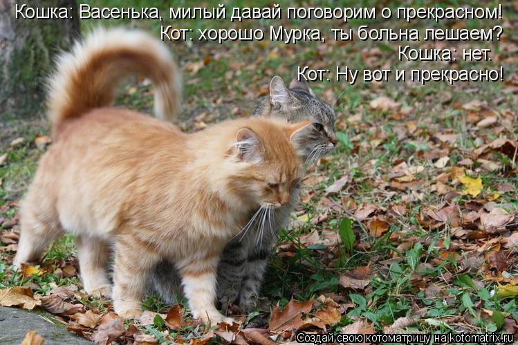 Котоматрица: Кошка: Васенька, милый давай поговорим о прекрасном! Кот: хорошо Мурка, ты больна лешаем? Кошка: нет. Кот: Ну вот и прекрасно!