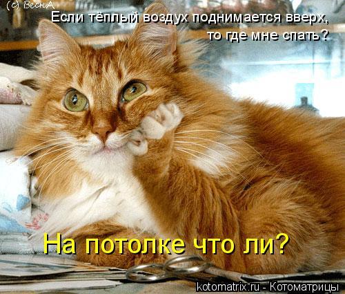 Котоматрица: Если тёплый воздух поднимается вверх, то где мне спать? На потолке что ли?