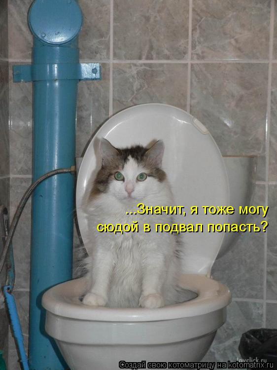 Котоматрица: ...Значит, я тоже могу сюдой в подвал попасть?