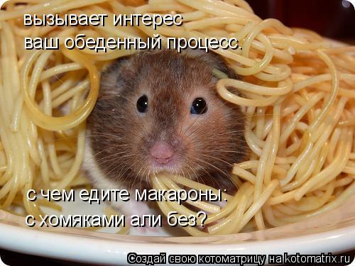 Котоматрица: вызывает интерес  с хомяками али без? с чем едите макароны: ваш обеденный процесс.