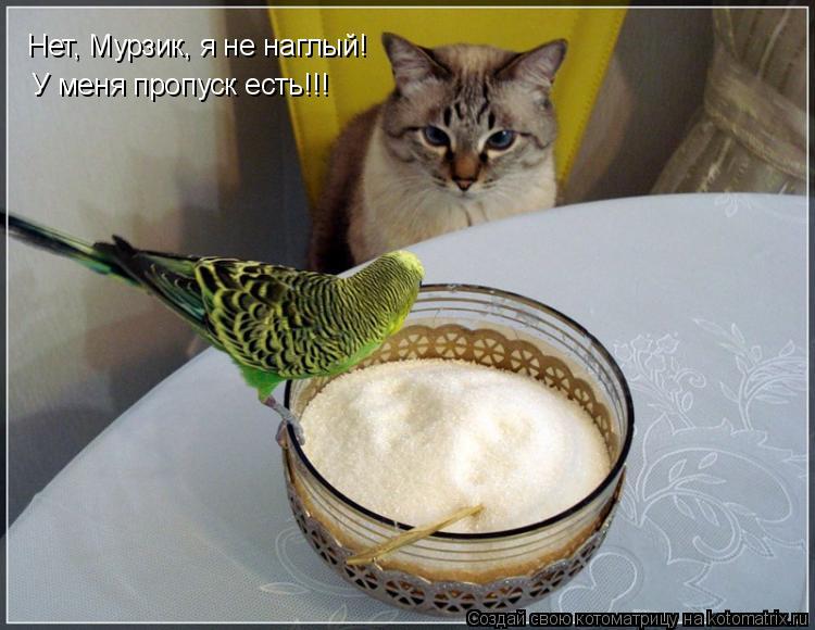 Котоматрица: Нет, Мурзик, я не наглый! У меня пропуск есть!!!