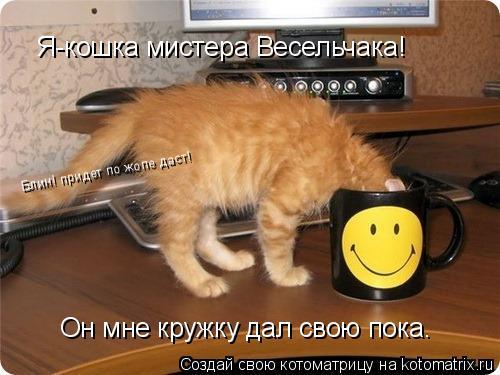 Котоматрица: Я-кошка мистера Весельчака! Он мне кружку дал свою пока. Блин! придет по жопе даст!