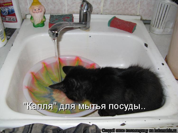 """Котоматрица: """"Капля"""" для мытья посуды.."""