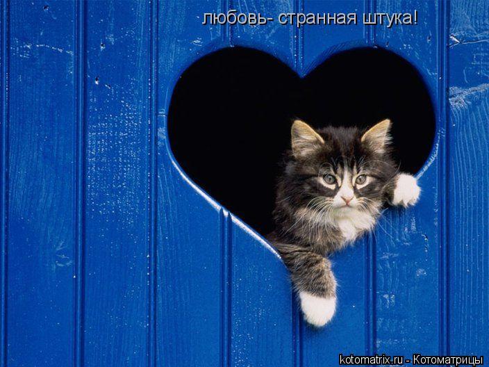 Котоматрица: любовь- странная штука!