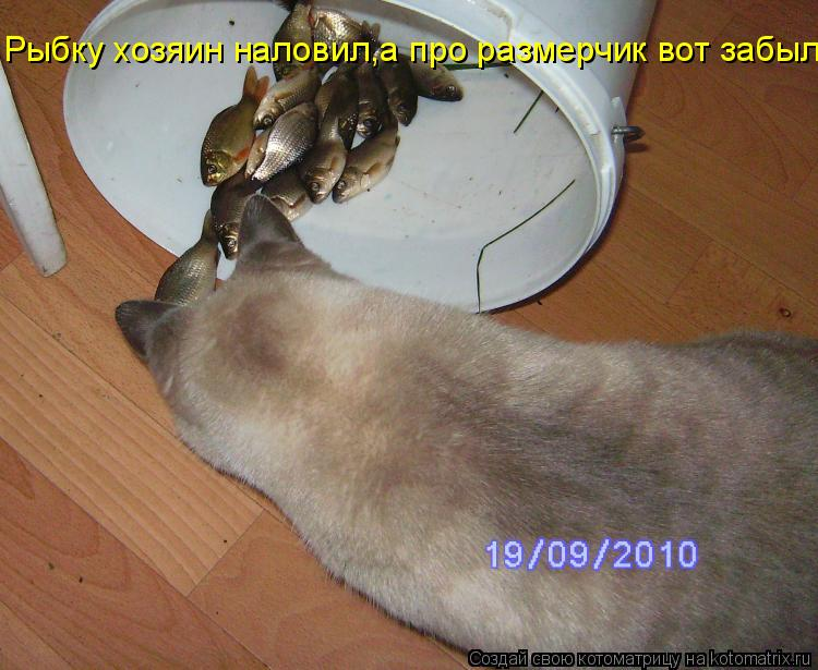 Котоматрица: Рыбку хозяин наловил,а про размерчик вот забыл...