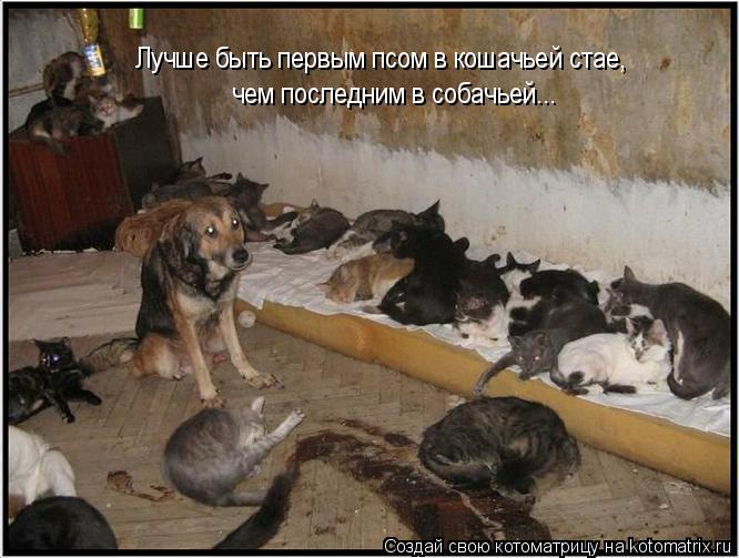 Котоматрица: Лучше быть первым псом в кошачьей стае, чем последним в собачьей...