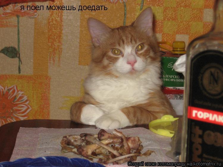 Котоматрица: я поел можешь доедать