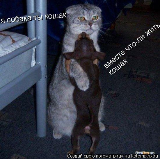 Котоматрица: я собака ты кошак  вместе что-ли жить кошак   кошак
