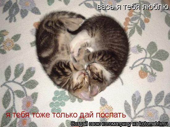 Котоматрица: вась я тебя люблю я тебя тоже только дай поспать