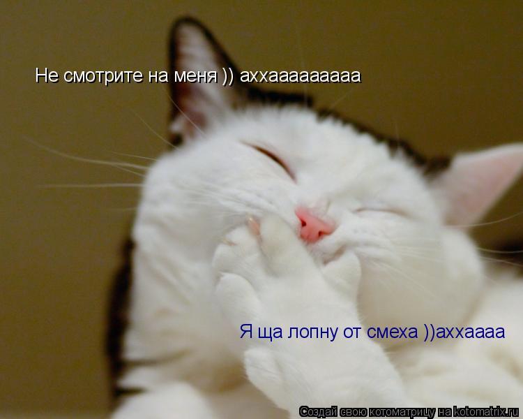 Котоматрица: Я ща лопну от смеха ))аххаааа Не смотрите на меня )) аххааааааааа