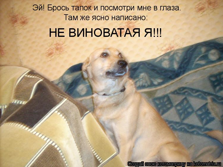 Котоматрица: Эй! Брось тапок и посмотри мне в глаза. Там же ясно написано: НЕ ВИНОВАТАЯ Я!!!