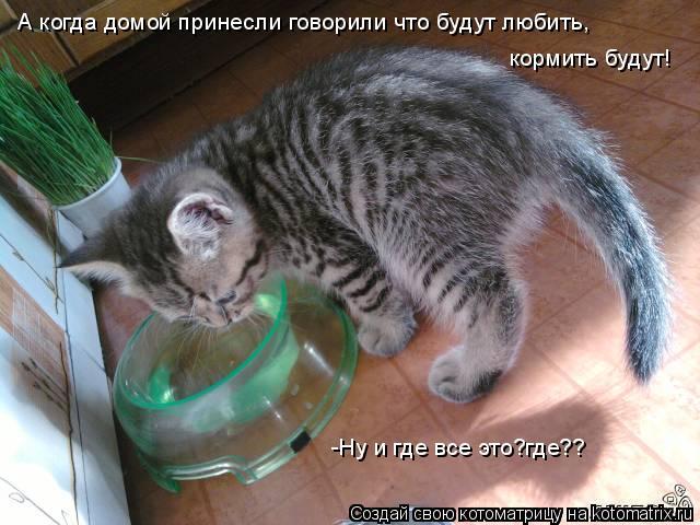 Котоматрица: А когда домой принесли говорили что будут любить, кормить будут! -Ну и где все это?где??