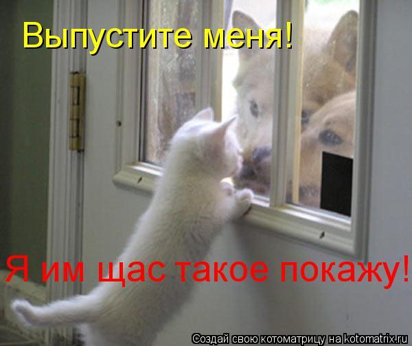 Котоматрица: Выпустите меня! Я им щас такое покажу!
