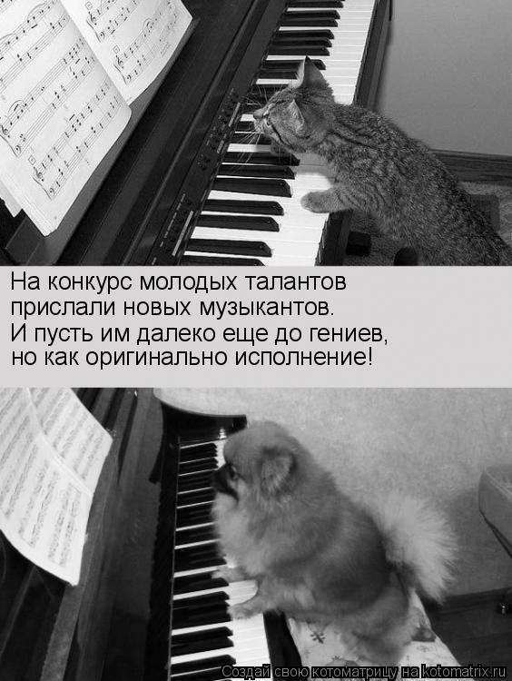 Котоматрица: На конкурс молодых талантов прислали новых музыкантов. И пусть им далеко еще до гениев, но как оригинально исполнение!