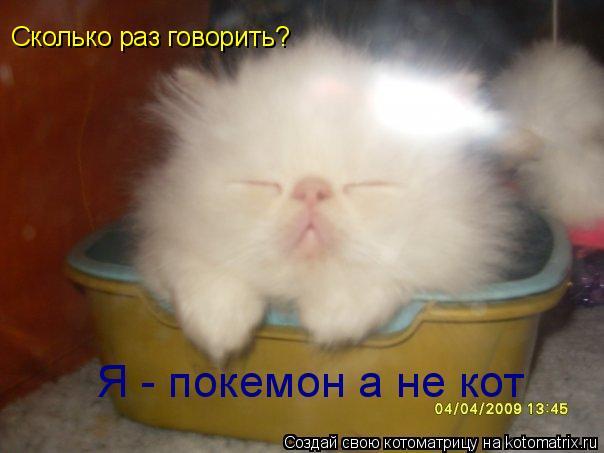 Котоматрица: Сколько раз говорить? Я - покемон а не кот