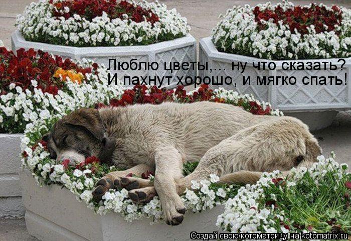 Котоматрица: Люблю цветы,... ну что сказать? И пахнут хорошо, и мягко спать!