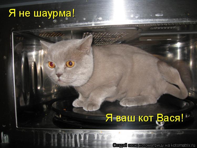 Котоматрица: Я не шаурма! Я ваш кот Вася!