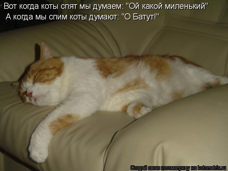 """Котоматрица: А когда мы спим коты думают: """"О Батут!"""" Вот когда коты спят мы думаем: """"Ой какой миленький"""""""