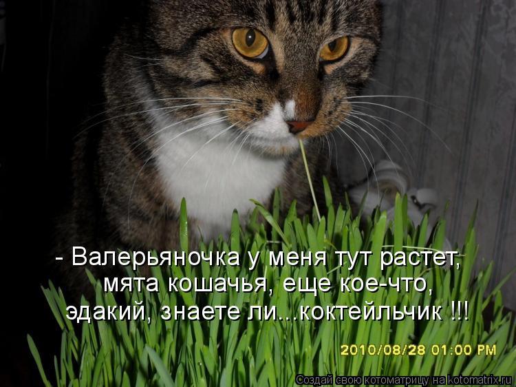 Котоматрица: - Валерьяночка у меня тут растет, мята кошачья, еще кое-что, эдакий, знаете ли...коктейльчик !!!