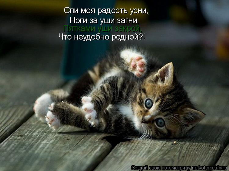 Котоматрица: Спи моя радость усни, Ноги за уши загни, Пятками уши закрой, Что неудобно родной?!