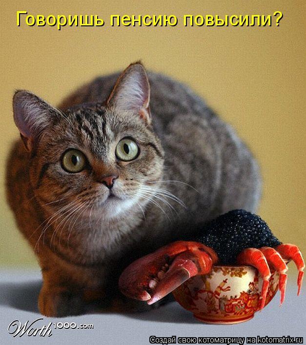 Прикольные кошки хозяйка дома