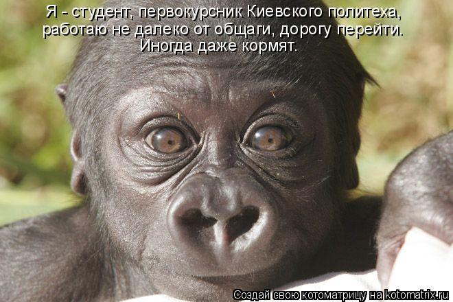 Котоматрица: Я - студент, первокурсник Киевского политеха,  работаю не далеко от общаги, дорогу перейти. Иногда даже кормят.