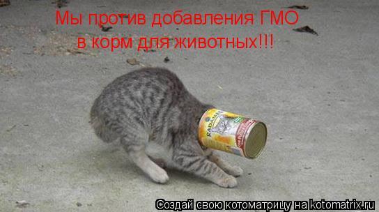 Котоматрица: Мы против добавления ГМО в корм для животных!!!