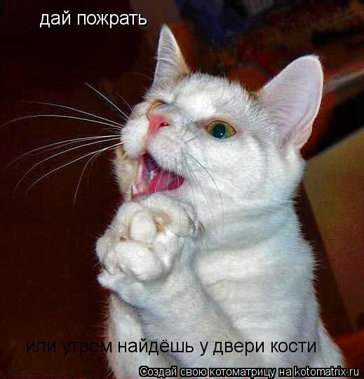 Котоматрица: дай пожрать а  дай пожрать или утром найдёшь у двери кости