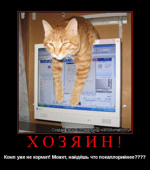 Котоматрица: ХОЗЯИН! Комп уже не кормит! Может, найдёшь что покаллорийнее????