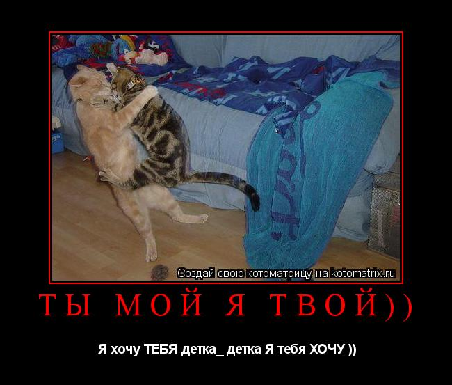 Котоматрица: Ты мой я твой))  Я хочу ТЕБЯ детка_ детка Я тебя ХОЧУ ))